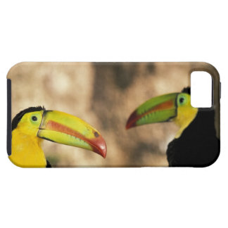 Central America, Honduras. Keel-billed Toucan 2 iPhone 5 Cover