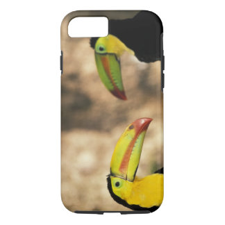 Central America, Honduras. Keel-billed Toucan 2 iPhone 8/7 Case