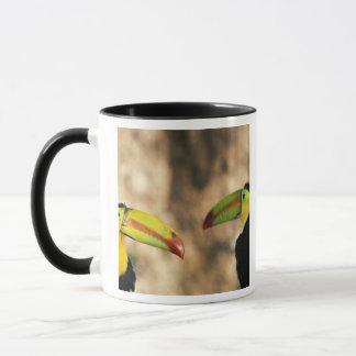 Central America, Honduras. Keel-billed Toucan 2 Mug