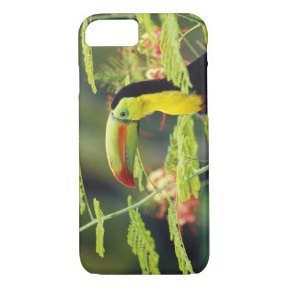 Central America, Honduras. Keel-billed Toucan iPhone 8/7 Case