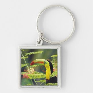 Central America, Honduras. Keel-billed Toucan Silver-Colored Square Key Ring