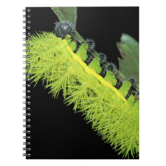 Central America, Panama, Barro Colorado Island. 4 Notebook