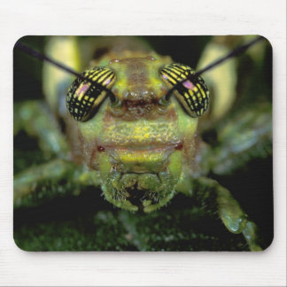 Central America, Panama, Barro Colorado Island. 6 Mouse Mat