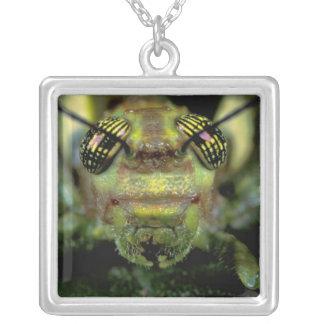 Central America, Panama, Barro Colorado Island. 6 Silver Plated Necklace