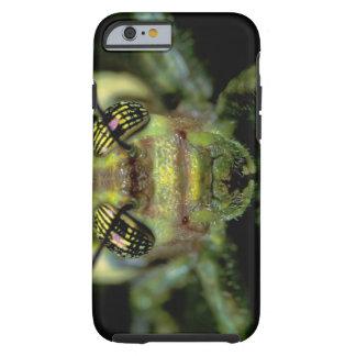 Central America, Panama, Barro Colorado Island. 6 Tough iPhone 6 Case