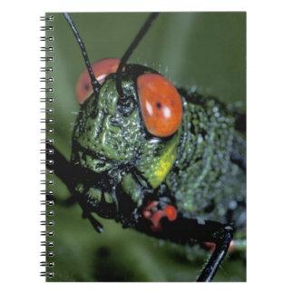 Central America, Panama, Barro Colorado Island. 7 Spiral Notebook