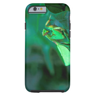 Central America, Panama, Barro Colorado Island. Tough iPhone 6 Case