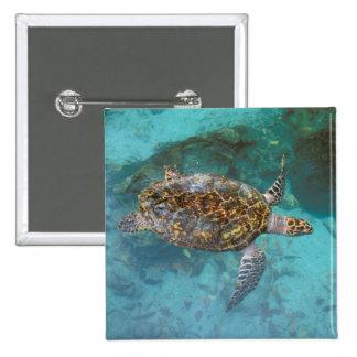 Central America, Panama, Bocas Del Torro Island. 15 Cm Square Badge