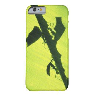 CENTRAL AMERICA, Panama, Borro Colorado Barely There iPhone 6 Case