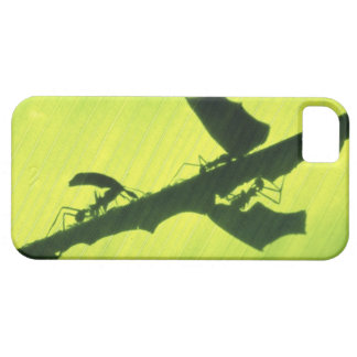 CENTRAL AMERICA, Panama, Borro Colorado iPhone 5 Case