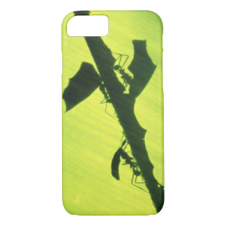 CENTRAL AMERICA, Panama, Borro Colorado iPhone 8/7 Case