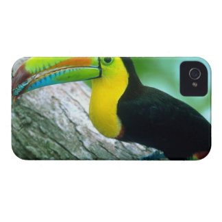 CENTRAL AMERICA, Panama, Borro Colorado Island 2 iPhone 4 Covers