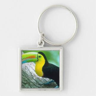 CENTRAL AMERICA, Panama, Borro Colorado Island 2 Key Ring