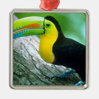 CENTRAL AMERICA, Panama, Borro Colorado Island 2 Silver-Colored Square Decoration