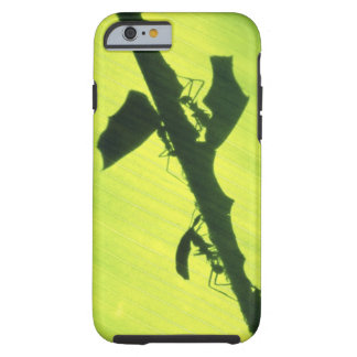 CENTRAL AMERICA, Panama, Borro Colorado Tough iPhone 6 Case