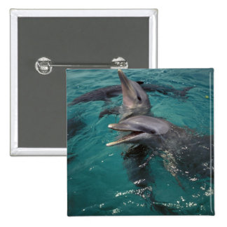 Central America, Panama. Bottle nosed dolphins 15 Cm Square Badge