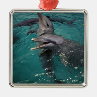 Central America, Panama. Bottle nosed dolphins Ornament