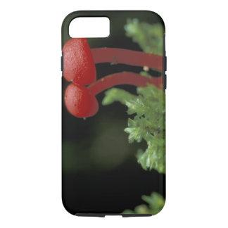 Central America, Panama, Chiriqui Province, 2 iPhone 8/7 Case