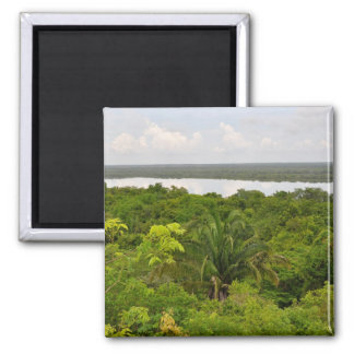 Central America Rain Forest in Belize Magnet