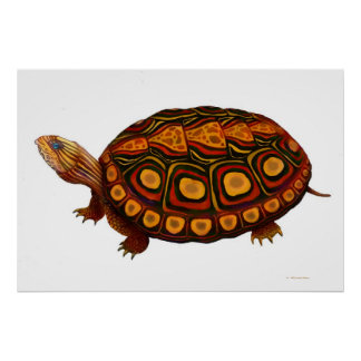 Central American Wood Turtle Print