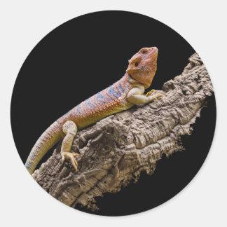 Central Bearded Dragon (Pogona vitticeps) Round Sticker