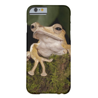 Central PA, USA,. Borneo Eared Frog; Barely There iPhone 6 Case
