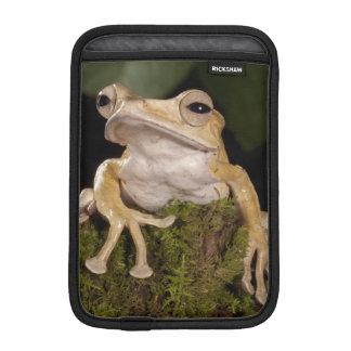 Central PA, USA,. Borneo Eared Frog; iPad Mini Sleeve