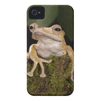Central PA, USA,. Borneo Eared Frog; iPhone 4 Case-Mate Case