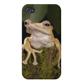 Central PA, USA,. Borneo Eared Frog; iPhone 4 Cases