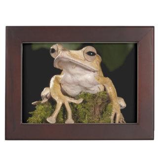 Central PA, USA,. Borneo Eared Frog; Keepsake Box