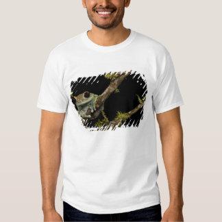 Central PA, USA, Maroon Eye Frog Moon Frog); Shirt