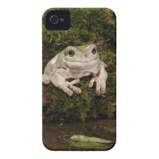 Central PA, USA, White's Treefrog; Litoria iPhone 4 Cover