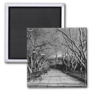 Central Park Black White Landscape Photo Magnets