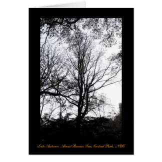 Central Park late autumn almost Barren Tree B&W Greeting Card