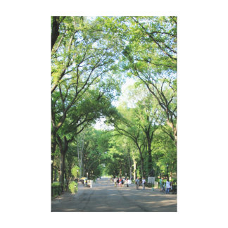 Central Park: Poet's Walk in the Summer Canvas Prints