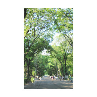 Central Park: Poet's Walk in the Summer Gallery Wrap Canvas
