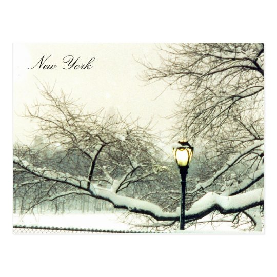 central park snowy tree postcard