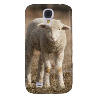 Central Pennsylvania, USA,Domestic sheep, Ovis Galaxy S4 Case