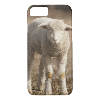 Central Pennsylvania, USA,Domestic sheep, Ovis iPhone 8/7 Case