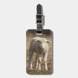 Central Pennsylvania, USA,Domestic sheep, Ovis Luggage Tag