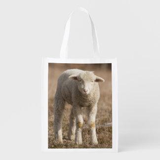 Central Pennsylvania, USA,Domestic sheep, Ovis Reusable Grocery Bag