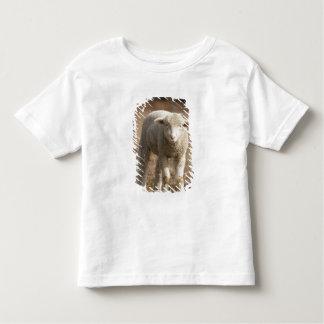 Central Pennsylvania, USA,Domestic sheep, Ovis Toddler T-Shirt