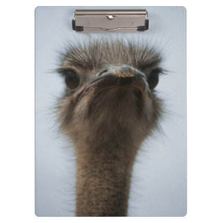 Central South Africa, African Ostrich, Close-up Clipboard