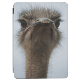 Central South Africa, African Ostrich, Close-up iPad Air Cover