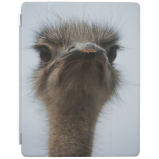 Central South Africa, African Ostrich, Close-up iPad Cover