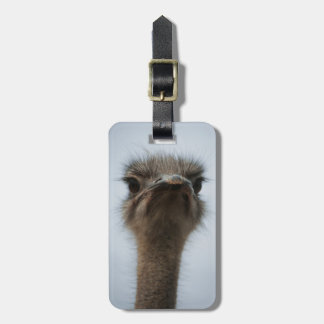 Central South Africa, African Ostrich, Close-up Luggage Tag