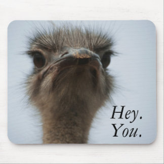 Central South Africa, African Ostrich, Close-up Mouse Mat