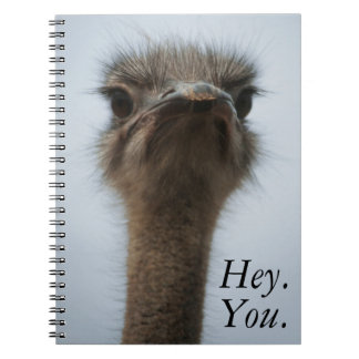 Central South Africa, African Ostrich, Close-up Note Books