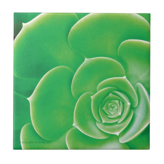 Ceramic Tile - Blooming Green Succulent