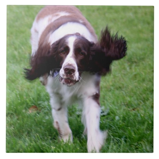 Ceramic tile with a photo of a spaniel